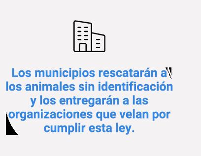 Los municipios rescatarán a los animales sin identificación y los entregarán a las organizaciones que velan por cumplir esta ley.
