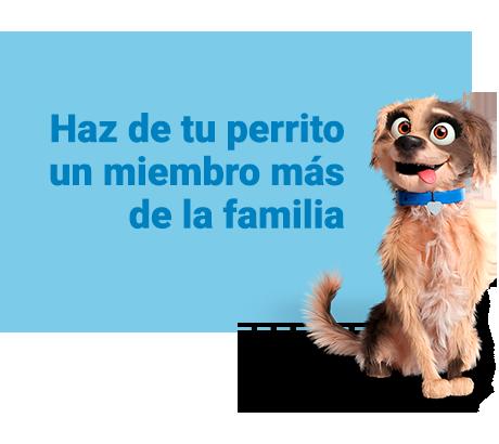 Haz de tu perrito un miembro más de la familia