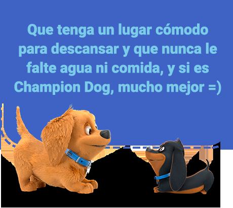 Que tenga un lugar cómodo para descansar y que nunca le falte agua ni comida, y si es Champion Dog, mucho mejor =)
