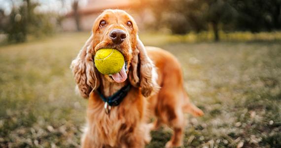 5 Curiosidades de los perros