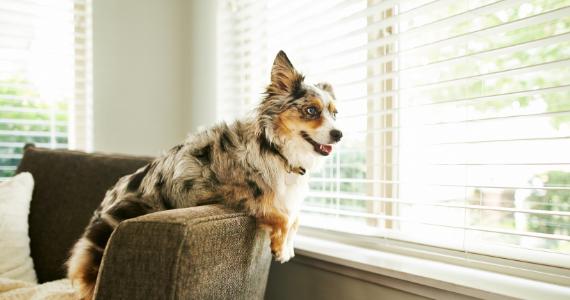 Tips para crear un ambiente adecuado cuando dejas a tu perro solo en casa