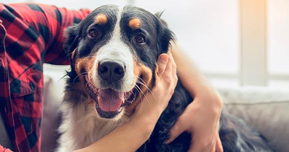 ¿Qué vacunas y desparasitaciones debe tener mi perro?