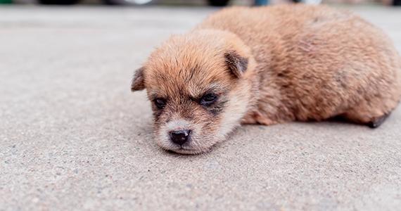 ¿Cómo reconocer si mi perro está ansioso?
