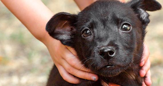 ¿Cómo saber de qué tamaño será de adulto tu cachorro mestizo?