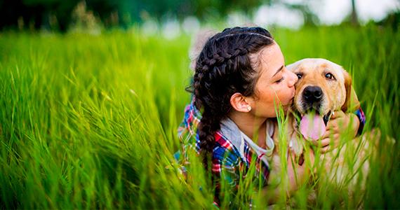 Cuidados especiales para perros grandes