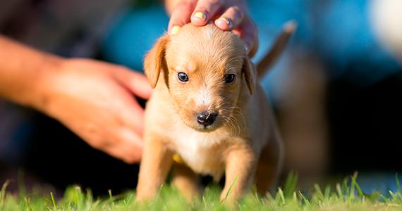 ¿Qué debes saber antes de adoptar a un perro?
