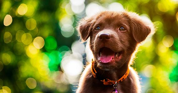 ¿Cuál es el nombre ideal para un perro?