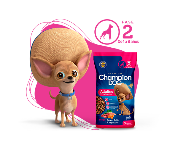 champion dog raza pequeña