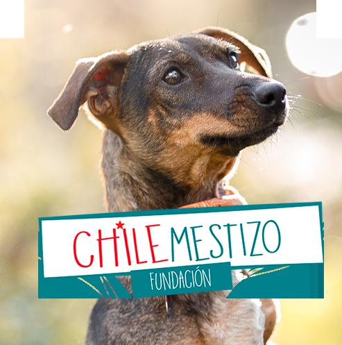 Chile mestizo